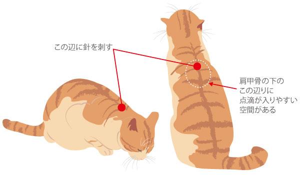 点滴の際は猫の肩甲骨下あたりに針を刺す